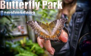 Butterfly Park of Benalmádena!